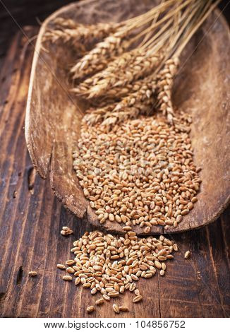 Barley in a scoop
