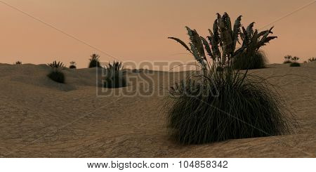 pampas grass on desert terrain
