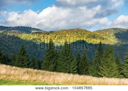 Amazing Mountain Forest In Early Autumn
