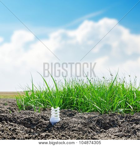 white spiral eco bulb on desert with green grass. soft focus