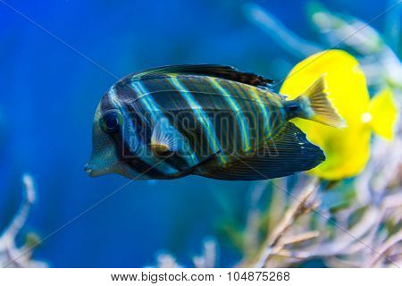 Colorful fish in aquarium saltwater world
