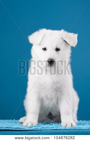 Beautiful puppy of White Swiss Shepherd Dog