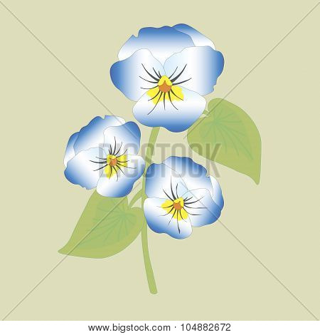 Viola flower vector illustration