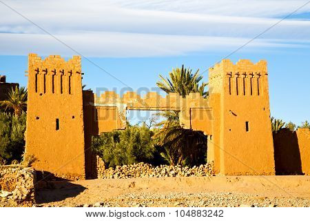 Palm Africa In Morocco
