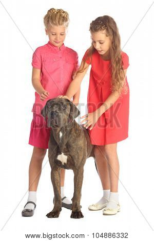 Two beautiful girls stroking a big dogs head isolated on white. Focus on the dog
