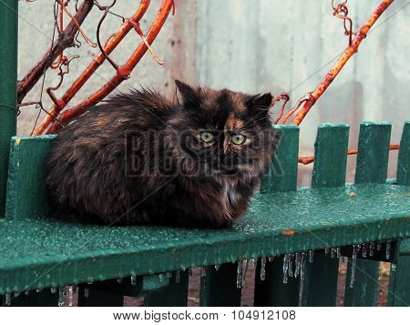 Homeless fluffy cat on a bench in the icy cold weather in winter