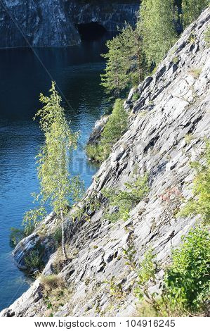 Forest on a marble cliff over the water