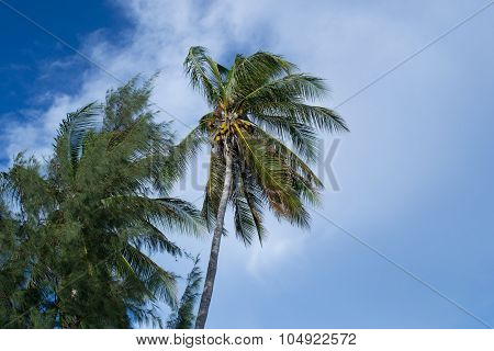 Palm tree on Kwajalein Marshall Islands
