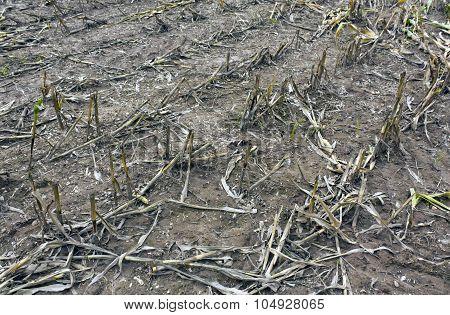 Corn Crop Residues.