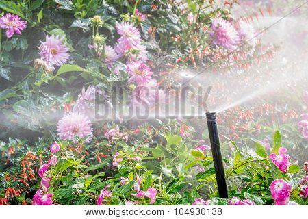 water sprinklers running in a garden with a variety of flowers