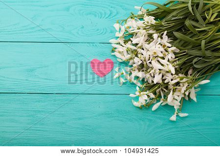 Snowdrops with heart on blue wooden background. Top view