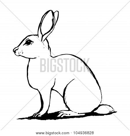 Hare Sketch In Black And White