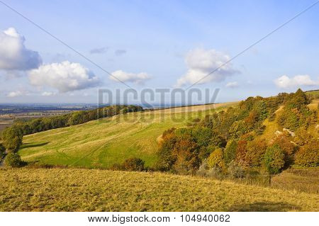 Meadow Lands In Autumn