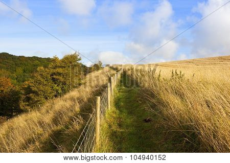 Country Footpath In Autumn