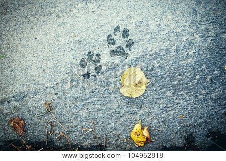 The dog 's footprints on cement floor background