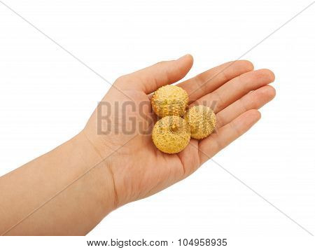 Fruit Lichee In Hand