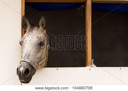 Horse In A Horsebox.