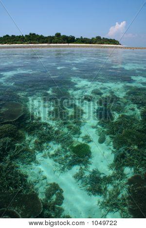 Ilha de Sipadan