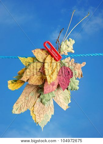 Bunch of different fall leaves drying outdoors attached to a laundry string with clip over blue sky