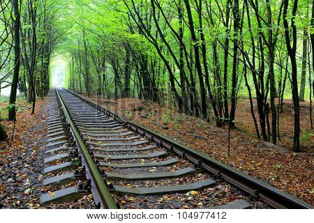 landscape with railroad in wet autumn forest