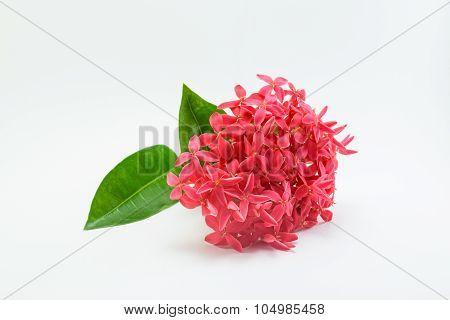 Ixora Flower On White Background