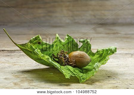 Hazelnut  In A Dry Green Leaf On  Rustic Wood