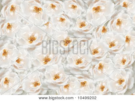 Floral Rose Flower Backdrop