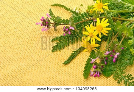 Wildflowers, Chamomiles, Milfoil On Yellow Sacking Background