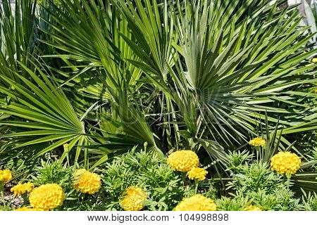 Fluffy Palm Branches With Green Leaves