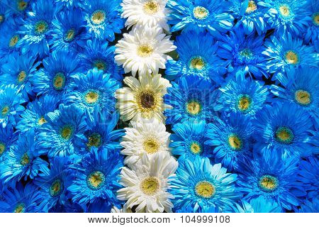 Blue and white flowers decoration Madeira Flower Festival