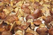 Texture Of Polish Mushroom (xerocomus Badius) poster