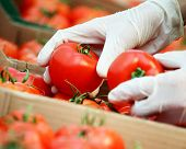 stock photo of grocery store  - Vegetable seller picking tomatoes in the grocerie store - JPG