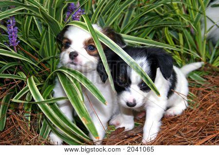 Filhotes de cachorro ao ar livre