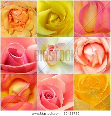 Beautiful collage of roses from nine photos