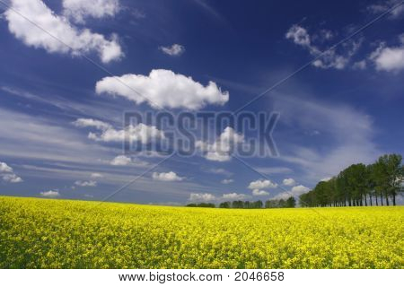 Colorful Spring Landscape