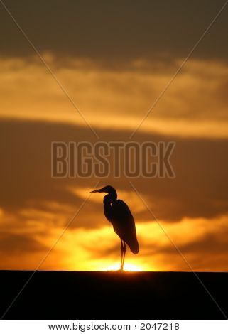 Sunrise Kissimmee Florida  With Egret 2