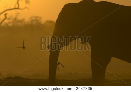Elephant Silhouette At Sunrise