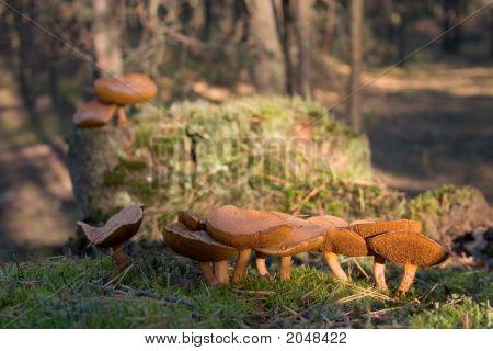 Mossiness Mushroom