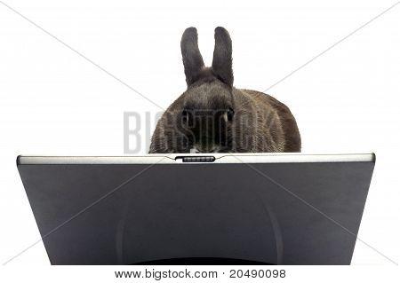 Webmaster de conejo