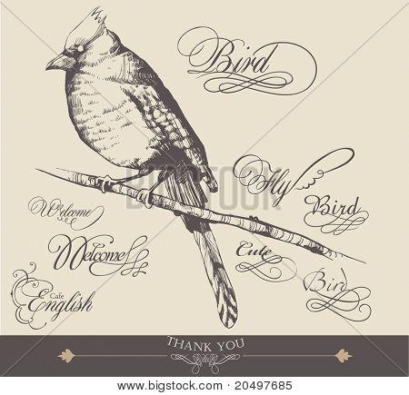 hand-drawn bird with elegance calligraphy design 3
