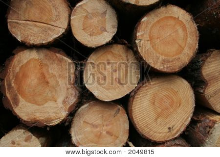 Lumbers In Crosscut