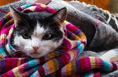 Cat Wrapped In A Warm Scarf. poster