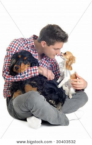 English Cocker, Chihuahua And Man