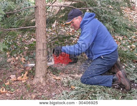 Man cutting hemlock tree with chips flying