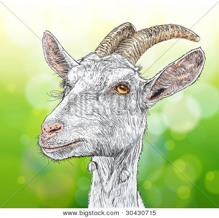 goat - a portrait. Bitmap copy my vector