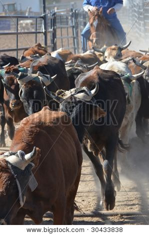 Cows In The Cattle