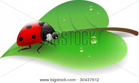 ladybug on green leaf with waterdrop