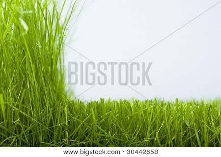 Natural grass and the cut off grass