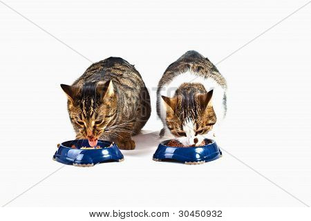 Two Cats Have Their Meal
