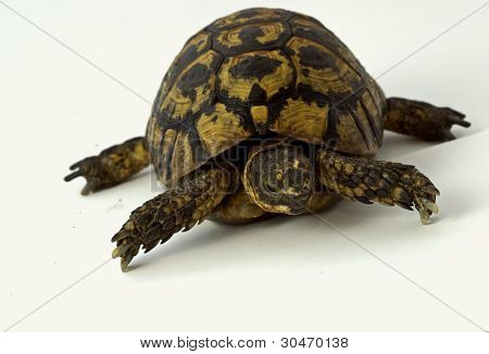 small tortoise on white background
